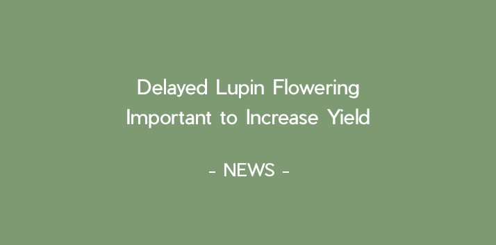 Delayed Lupin flowering important to increase yield.