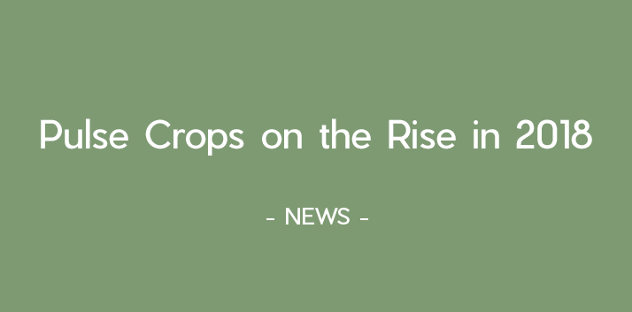 Pulse crops on the rise in 2018