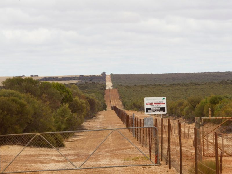 Not just a rabbit proof fence